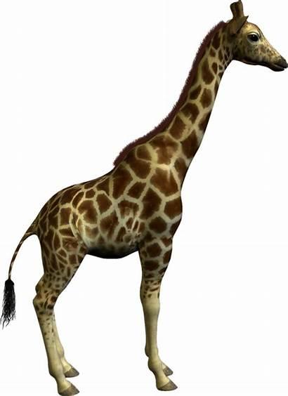 Animal Clipart Giraffe Clip Graphics Resolution Clipartmag