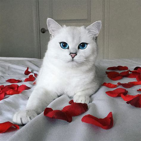 cat eyes instagram prettiest ever top13 adorable lovemeow credits