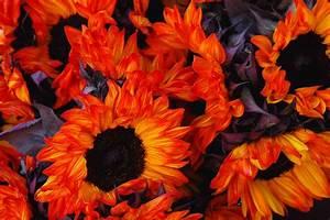 Bcx News Orange Color