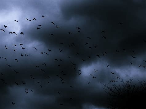Darkness Birds Fly Cold Wind Winter Cloudy Sky Emotions