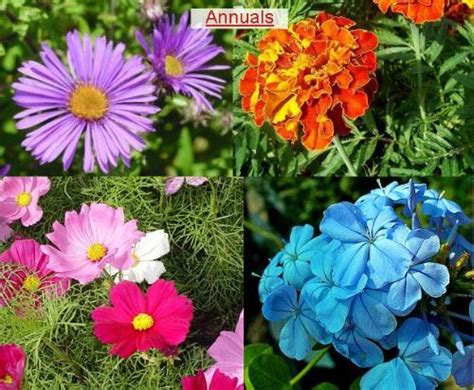 plant types annual perennial flowers and plants large or small annual biannual or perennial trees bushes vines i
