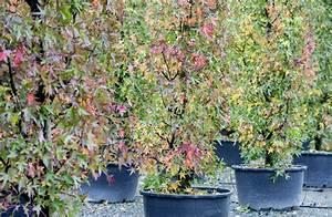 Welche Pflanzen Kann Man Im Herbst Pflanzen : gartentipp b ume und str ucher im herbst pflanzen ~ Articles-book.com Haus und Dekorationen