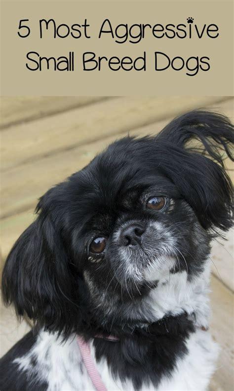 aggressive small breed dogs  small bites