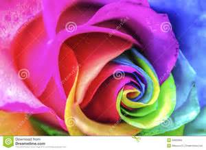 artificial flowers rainbow flower up royalty free stock images image