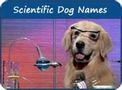 scientific dog names names  scientists  inventors