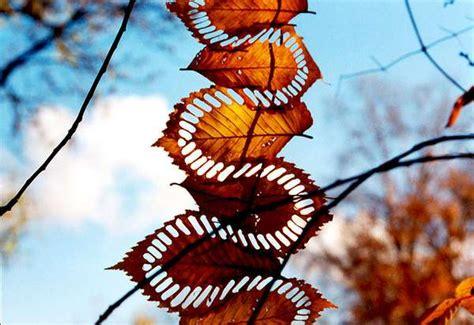 Deconstructed Nature Designs Walter Mason Land Art