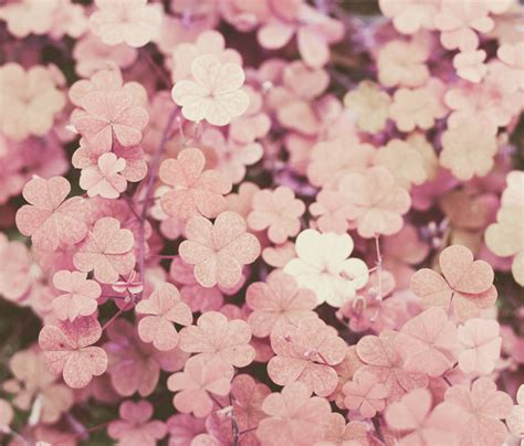 Burton Flower And Garden by Pink Clovers Explore Prints On Sale Here Thank You