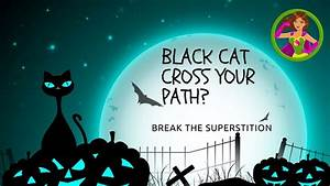 Black Cat Superstition - Break It Today