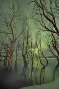 Iceland Northern Lights Forest