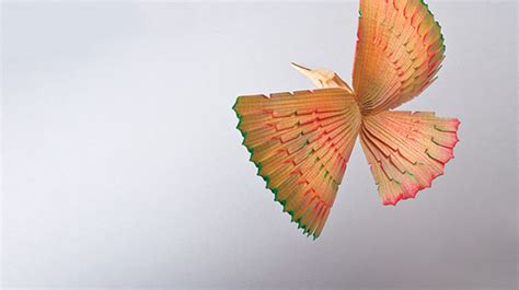 fan tailed hummingbird woodcarving illustrated