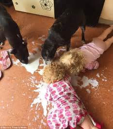 wigan mother catches daughters licking milk off the floor With dog licking the floor