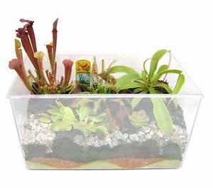 Pflanzen Für Aquarium : fleischfressende pflanzen aquarium zum selberpflanzen mittel bunte ~ Buech-reservation.com Haus und Dekorationen