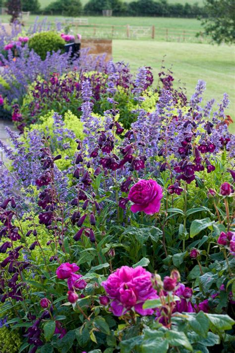 My Favorite Plant Combinations 66 (my Favorite Plant