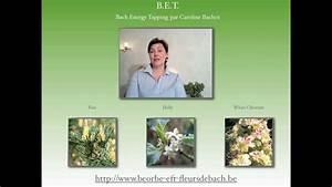 Caroline Bachot Eft : eft fran ais belgique bach energy tapping ho 39 oponopono youtube ~ Melissatoandfro.com Idées de Décoration