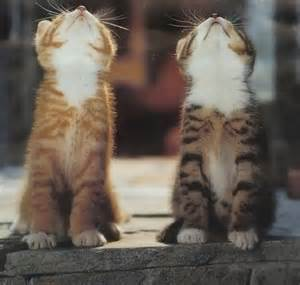 look up cats animals cats cutie kitty look up image 12184