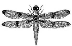 Dragonfly Clip Art Black and White
