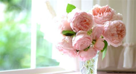 Wonderful Photos   Peony for mobile and desktop