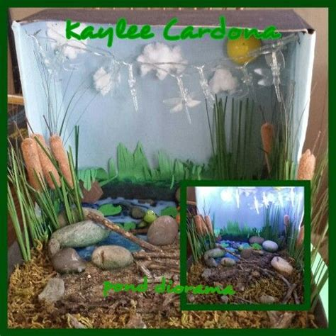 pond diorama diorama kids ecosystems projects