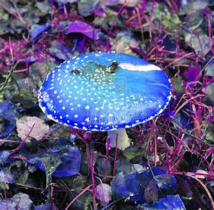 Blue Magic Mushroom by Dragon-flame13 on DeviantArt