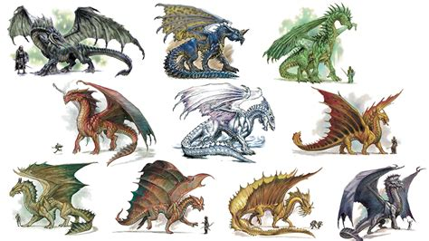 photo collection types of dragons