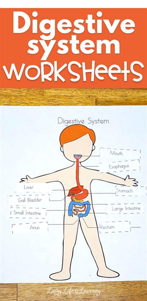 digestive system worksheets  kids