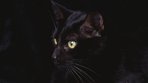 Background Black Cat by Wallpaper Black Cat The Best 69 Images In 2018