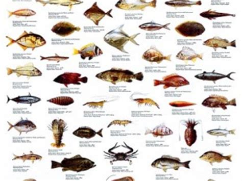 persian gulf fish species project aware