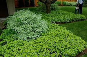 Schnell Wachsende Büsche : garten mit schatten pflanzen welche arten eignen sich ~ Whattoseeinmadrid.com Haus und Dekorationen