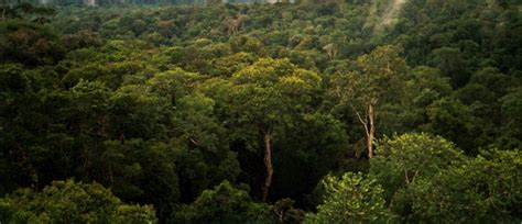 million soccer fields  amazonian rain forest saved
