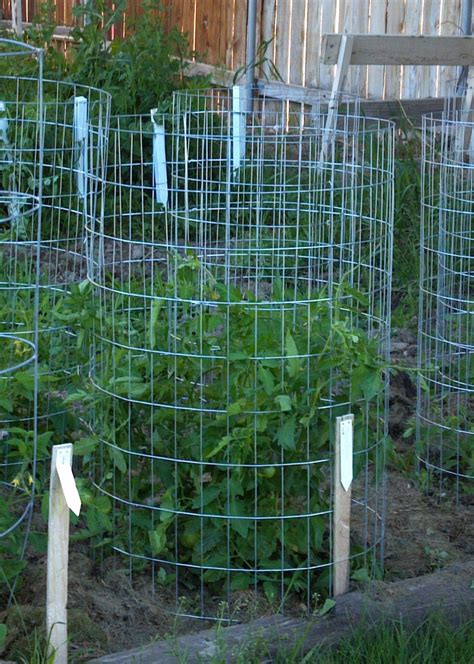 make your own tomato support cage antireliant - Build Tomato Cage