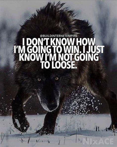 Wolf Quotes   Best Wolf Quotes Ideas And Images On Bing Find What You Ll Love