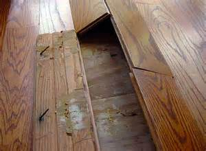 buckled hardwood floors analysis why fixes