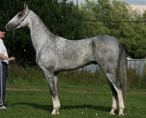 Beautiful Rare Horse Breeds in the World