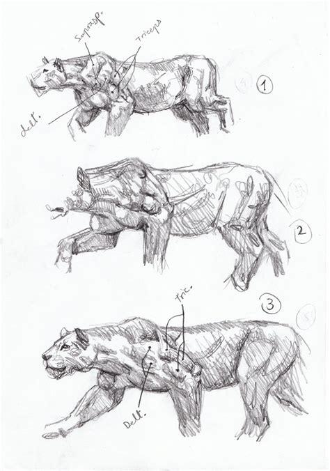 sabertooth diaries  big cat action sketches chasing