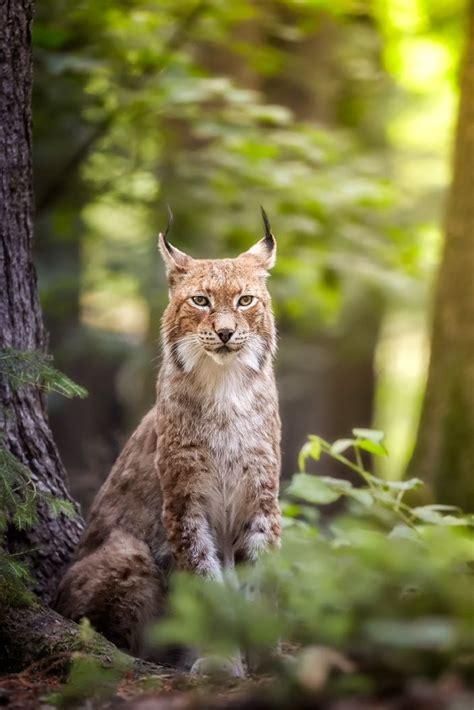 Best 25+ Forest Animals Ideas On Pinterest