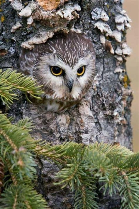 unique owl house ideas  pinterest owl box owl