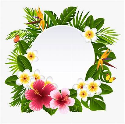 Hawaiian Wreath Clipart Flower Frame Frangipani Transparent