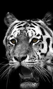 iPhone 6S Animal/White Tiger Wallpapers ID: 301455 Desktop ...