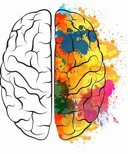 Brain Cerebro Clipart Icon Painted Painting Watercolor