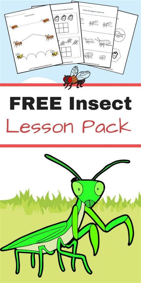 free printable insect worksheets for 2nd grade free insect worksheets great for elementary students