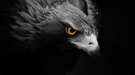 gambar mewarnai hewan burung gambar mewarnai hd