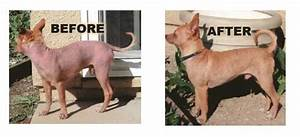 Demodectic Red Mange: Symptoms Diagnosis and Treatment