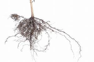 Plant root system-4161   Stockarch Free Stock Photos
