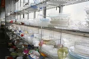 Mikrowelle Geschirr Glas : verkauf dresden geschirr gebraucht teller tassen porzelan m bel a v dresden ankauf und ~ Watch28wear.com Haus und Dekorationen