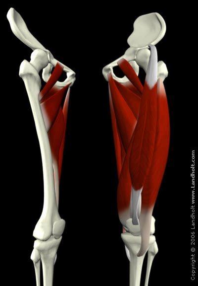 Long bone, short bone, flat bone, irregular bone and sesmoid bones. Smith's Science: October 2010