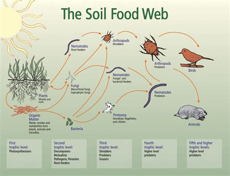 cuisine web biological activity ndsu soil health