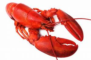What the Lobster Man Can Teach You About Changing Course ...