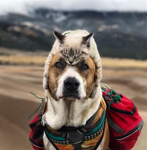 dog  kitten   friends  hiking  life mnn