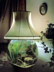 Lava Lamp Betta Fish Tank by Coffee Table Aquarium By Aqua Design