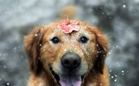 Wallpaper With Animals - animals snow leaves depth of field wallpapers hd
